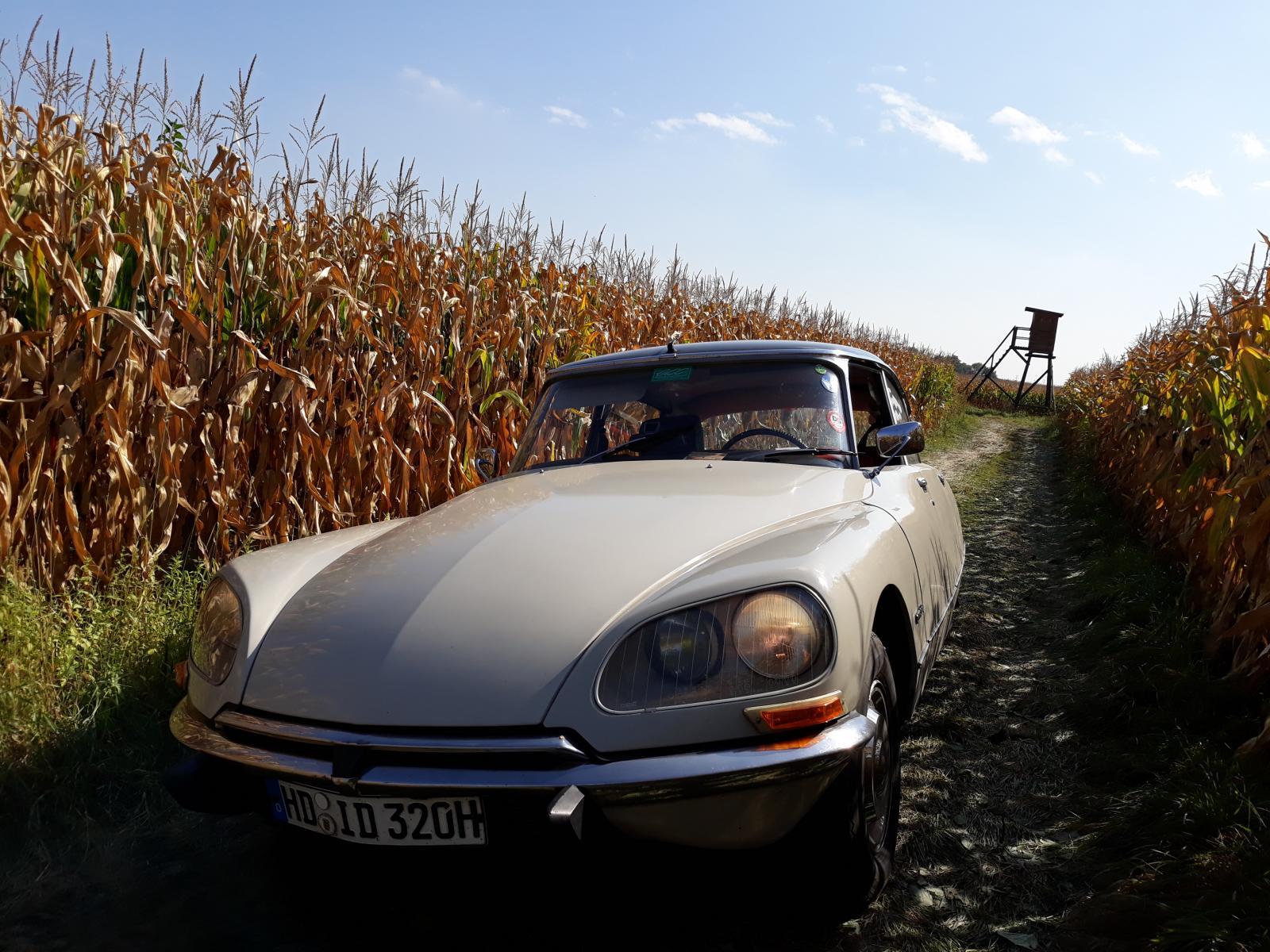 Ein DS im Kornfeld oder auch im Maisfeld.jpg