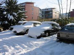 winterds 006.jpg