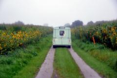 Sonnenblumenfeld in Köhn
