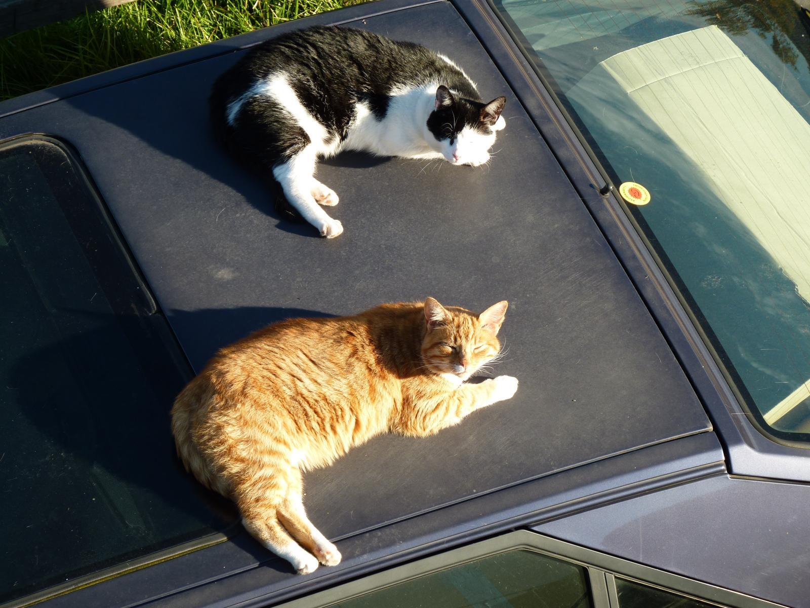 2 Katzen auf dem heißen Blechdach