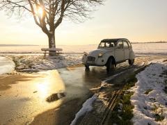 Winter-Ente